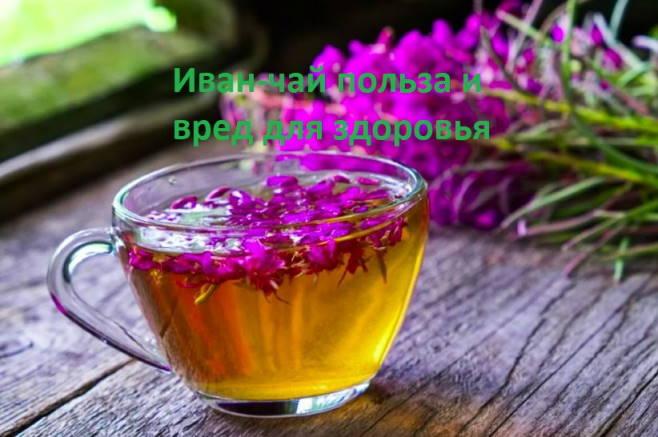 Иван-чай польза и вред для здоровья 1